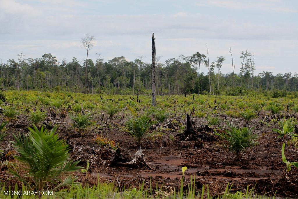 印尼政府:不會為了更有野心的減碳目標「犧牲經濟」