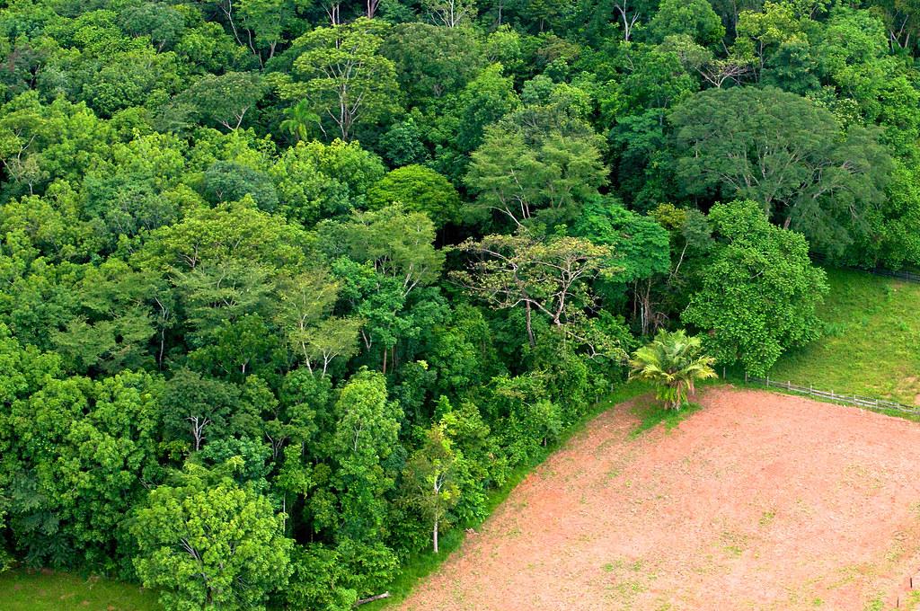 研究示警 全球近半樹種面臨滅絕風險 農業開發是主因